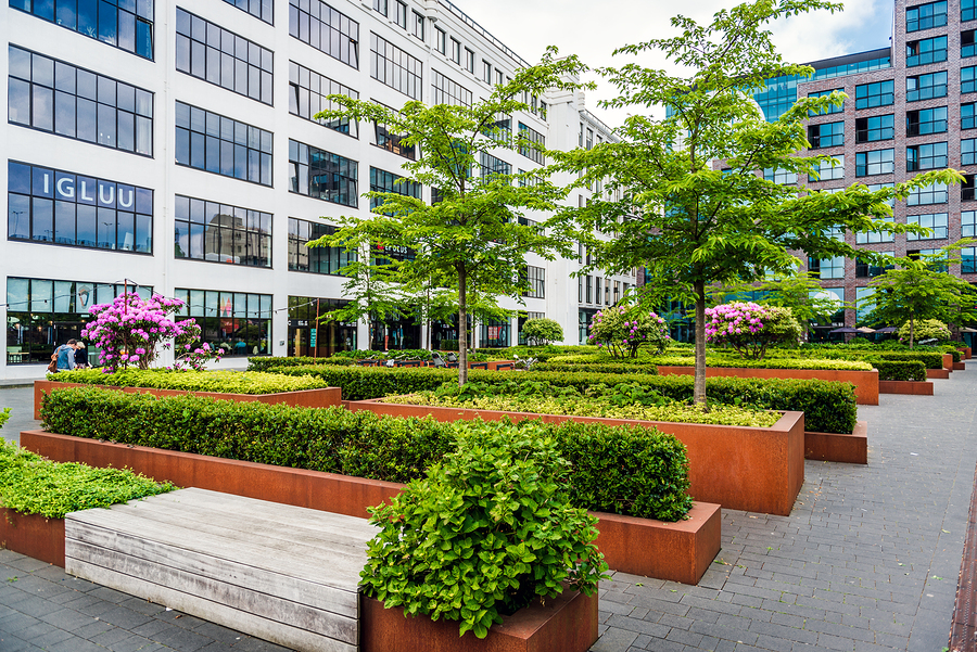 Why Perennials Are the Perfect Choice for Commercial Landscaping
