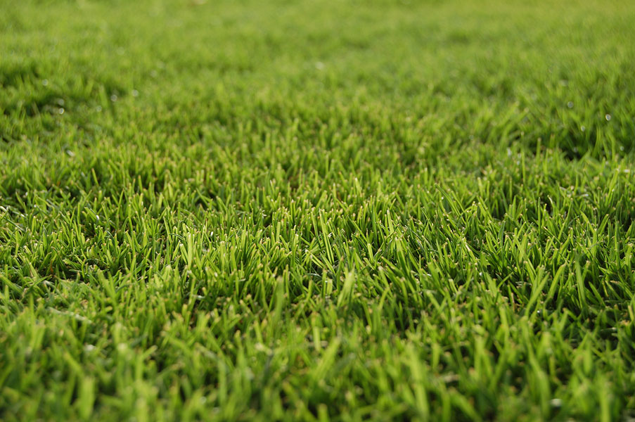 Four Types of Sod to Give your Business a Lift