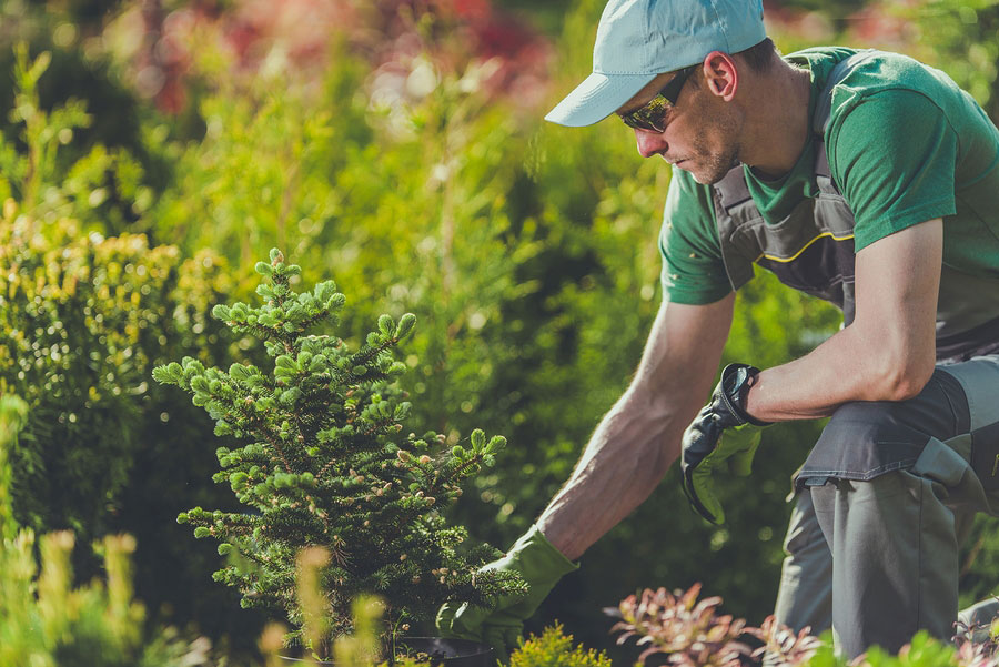 The Must Do's of a Commercial Landscaping Contractor