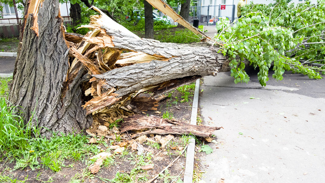 6 Tips to Protect Trees Against Severe Weather