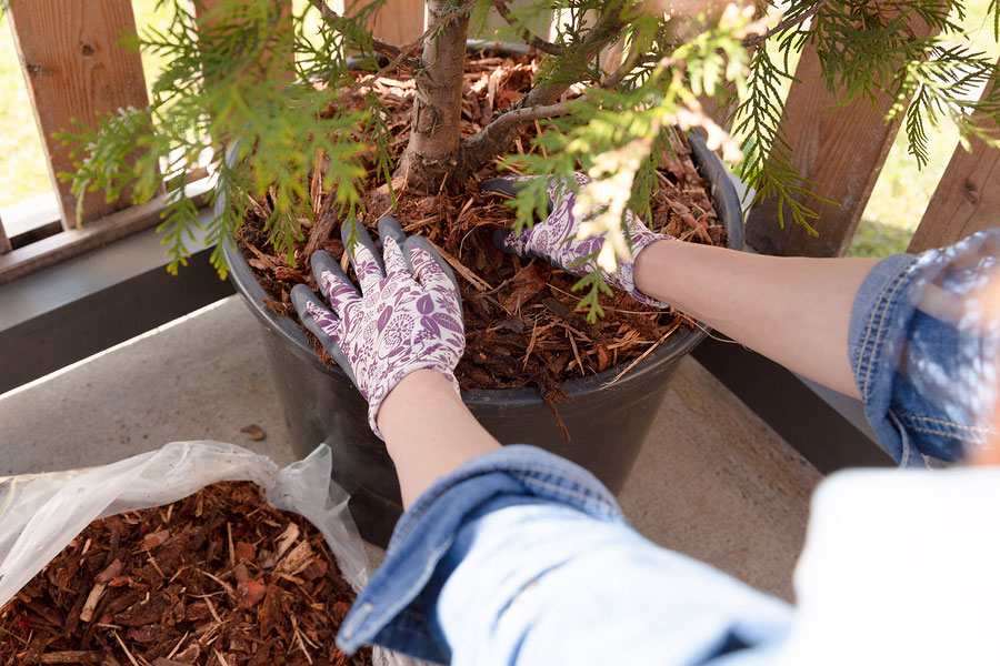 4 Ways that Mulch Protects Your Property's Landscape Investment