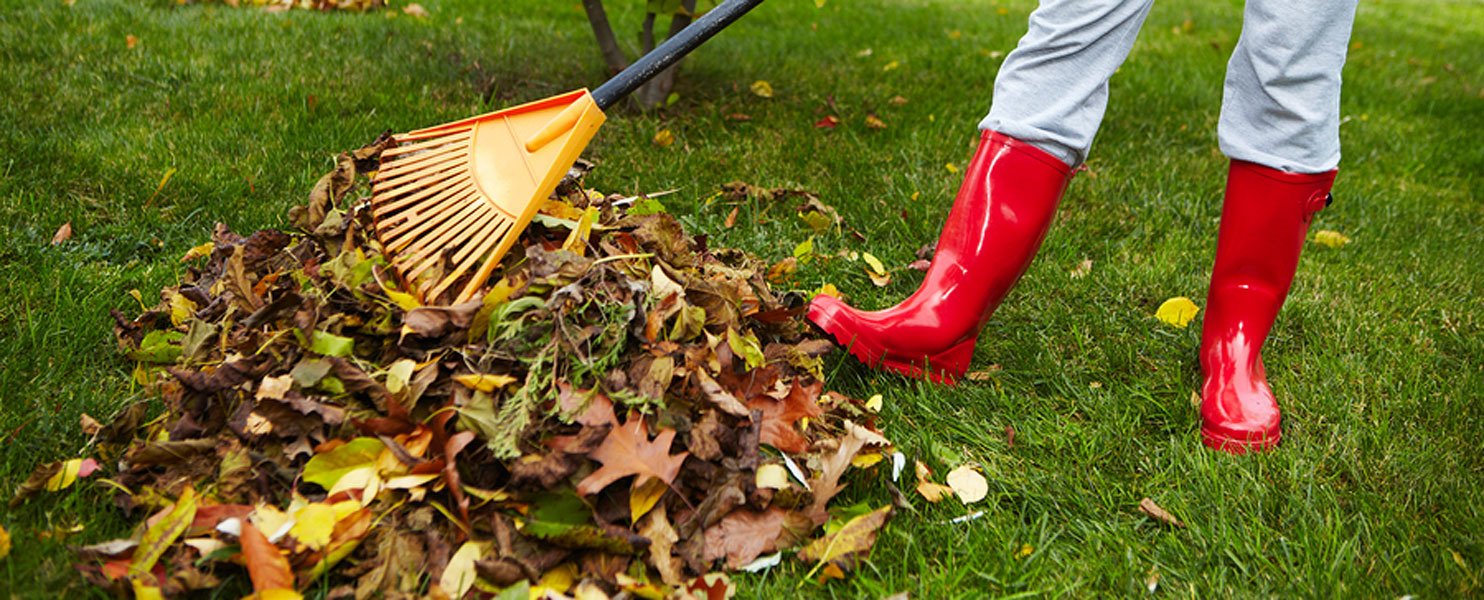 Keep your Landscape from Falling by the Wayside During Cooler Seasons